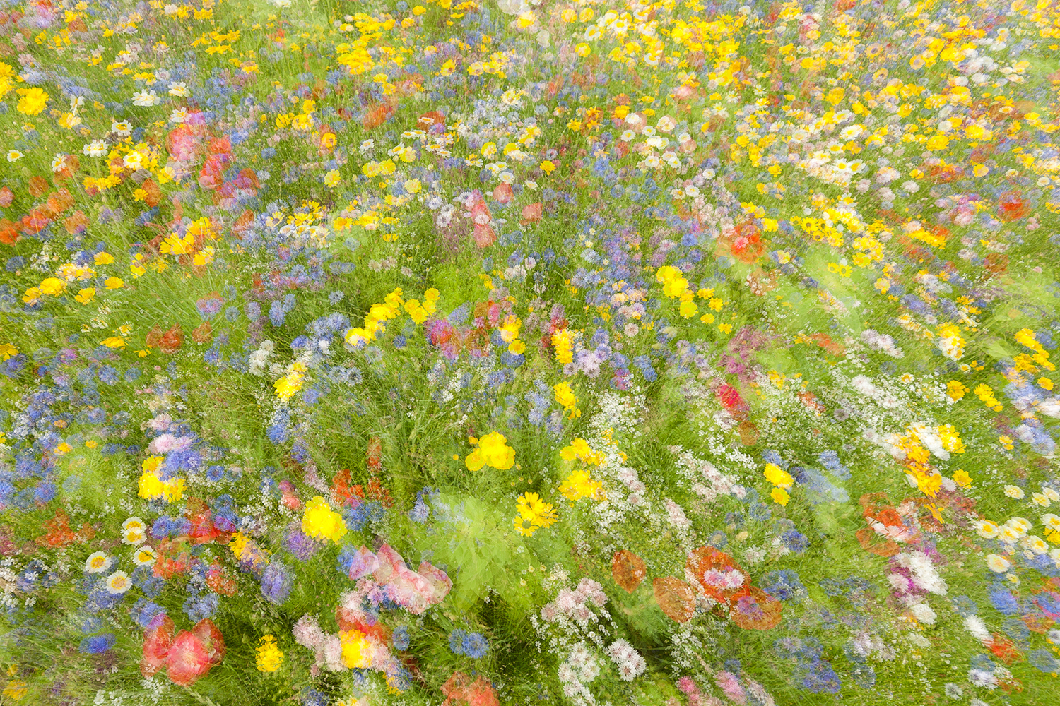 Photo Wallpaper Summer Field Flowers