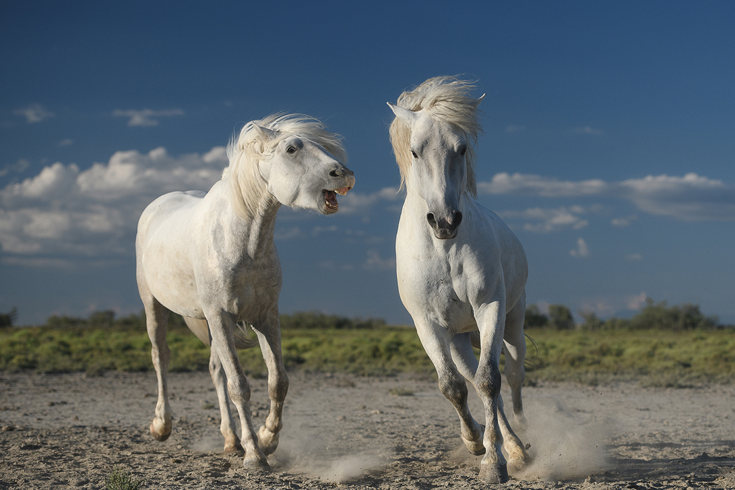 Photo Wallpaper White Horses