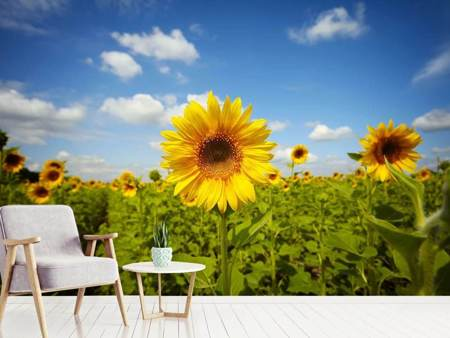 Photo Wallpaper Summer Sunflowers