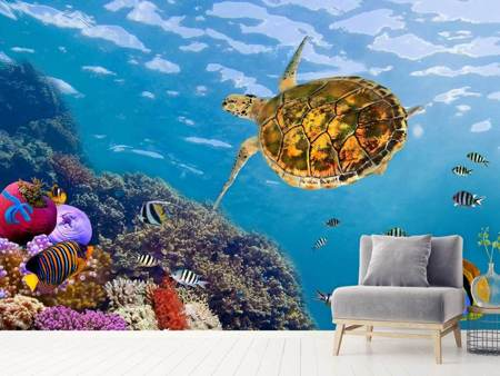 Photo Wallpaper The Turtle