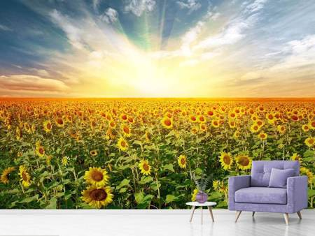 Papier peint photo Un champ plein de tournesols