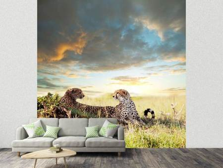 Photo Wallpaper Cheetahs