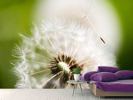 Photo Wallpaper Blowball Dandelion