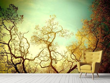 Photo Wallpaper Autumn Trees
