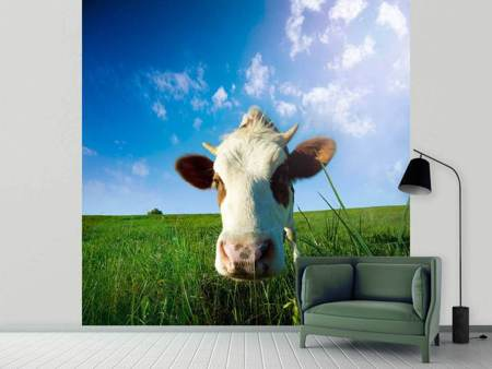 Photo Wallpaper The Cow