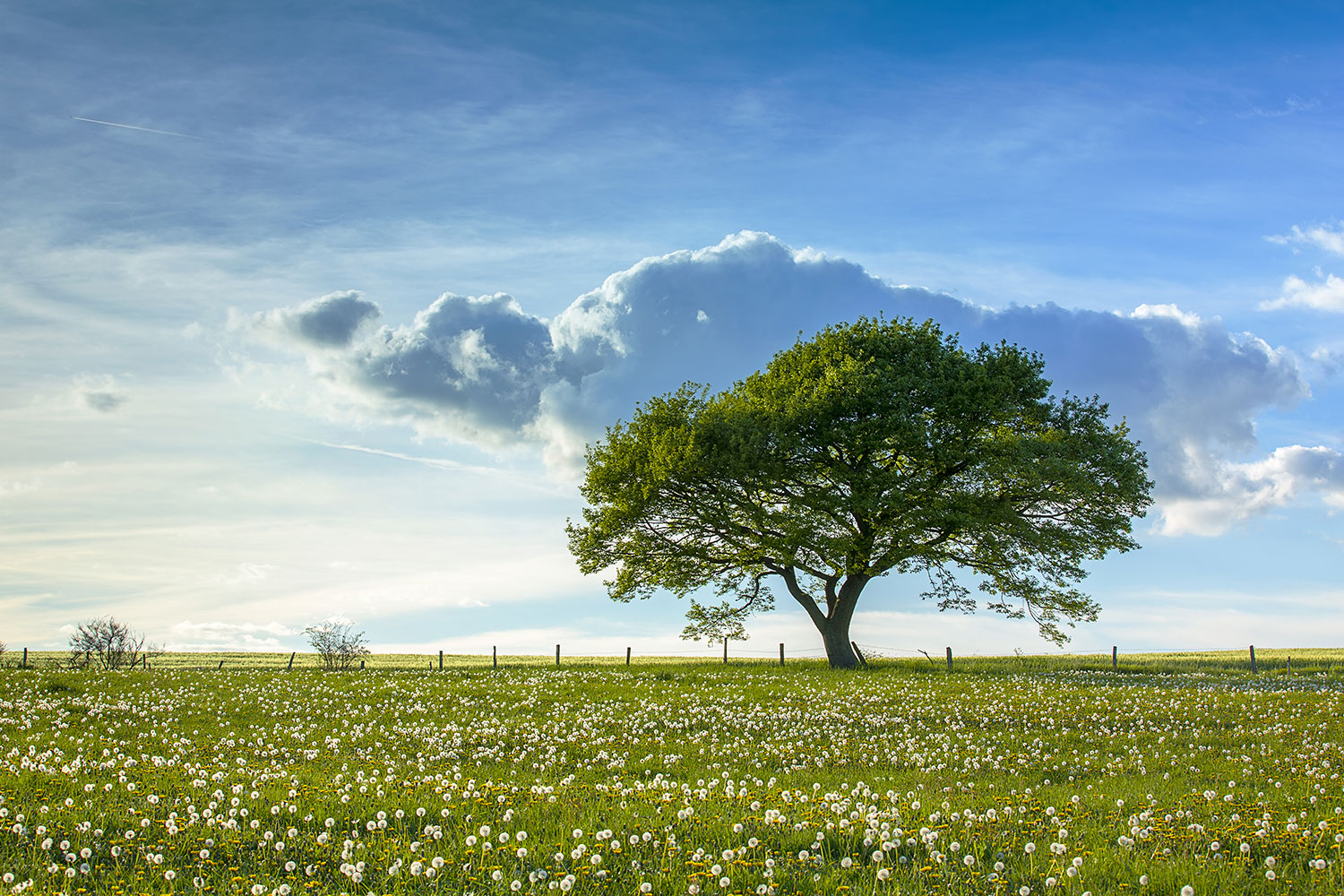 Photo Wallpaper Spring Tree