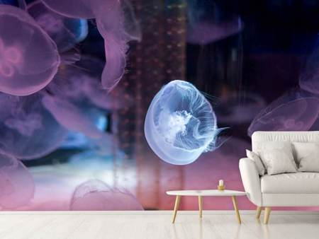 Photo Wallpaper The Beauty Of Jellyfish