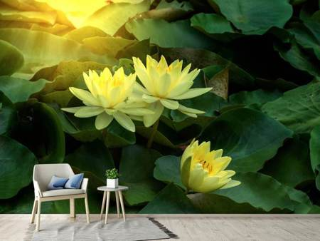 Photo Wallpaper Wild Lotus